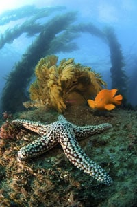 garibaldi-with-starfish-s