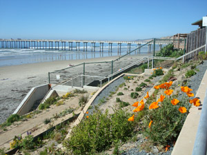 The newly planted ecology embankment at La Jolla Shores.