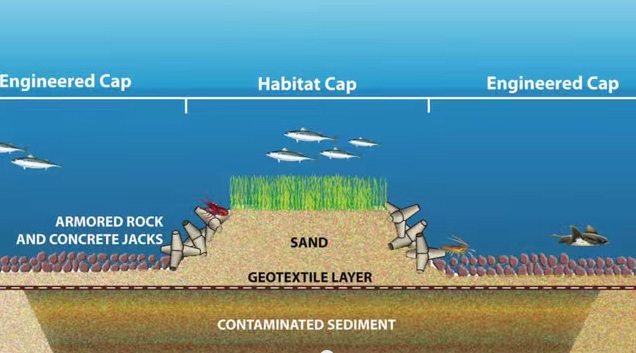 Campbell Sediment Cap Diagram
