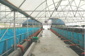 Biosecure KOI breeding and growing intensive facility in Israel