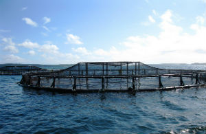 offshore aquaculture of the coast of Maine